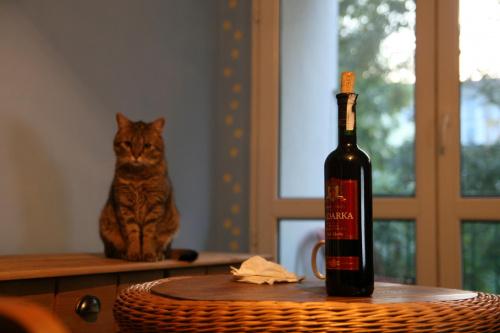 kocia wina :)